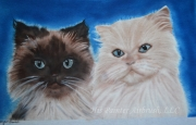 Buddy and Pumpkin - Himalayan Cats